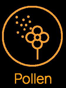 03_pollen-225x300.png